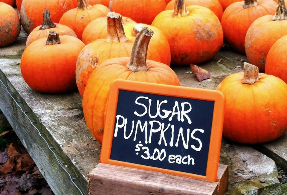 Sugar Pumpkins