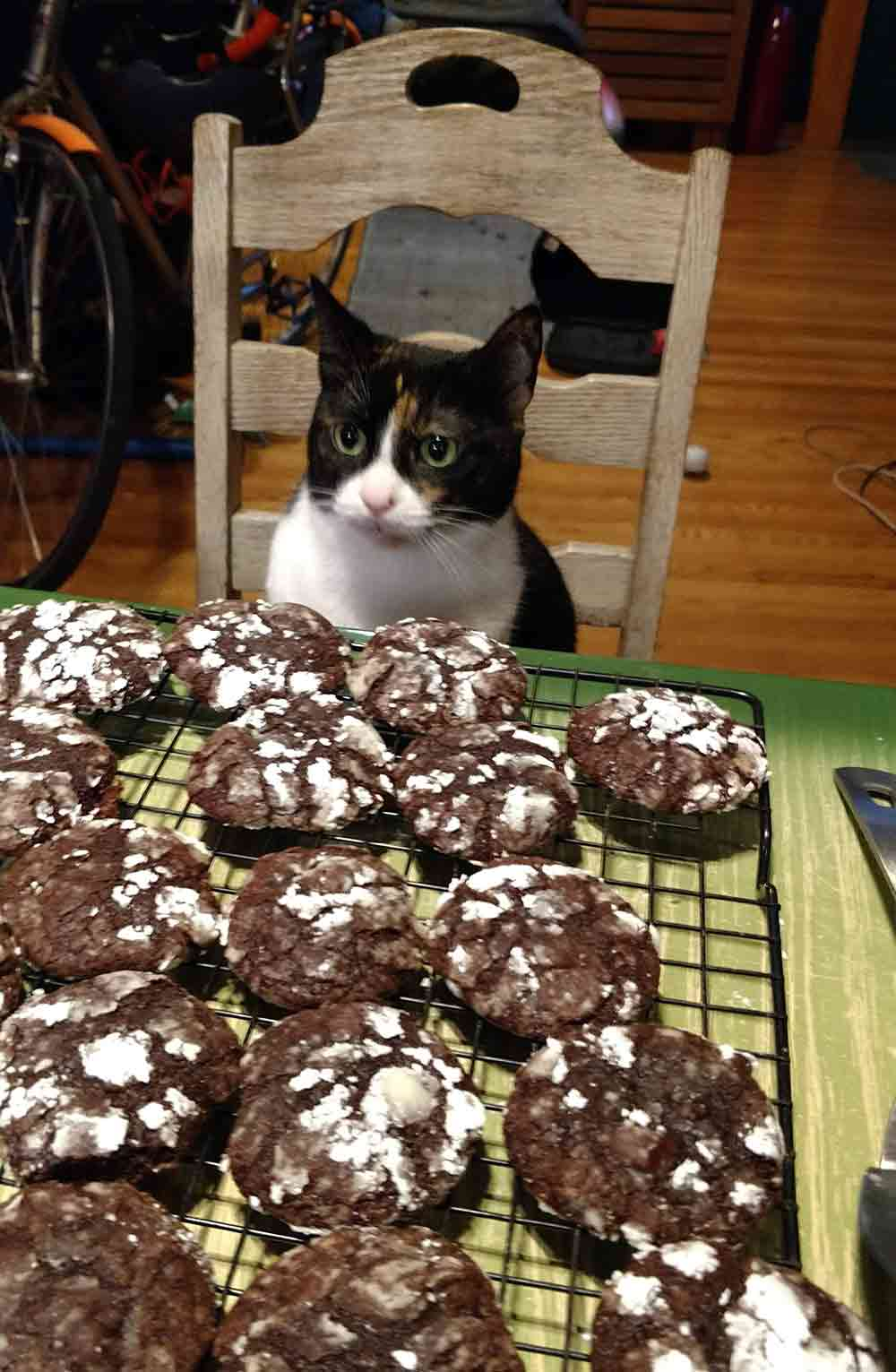A table of freshly baked chocolate-ginger crinkle cookies covered in powder sugar