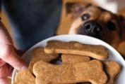 A person holding a white platter filled with homemade dog treats and a dog looking at them.