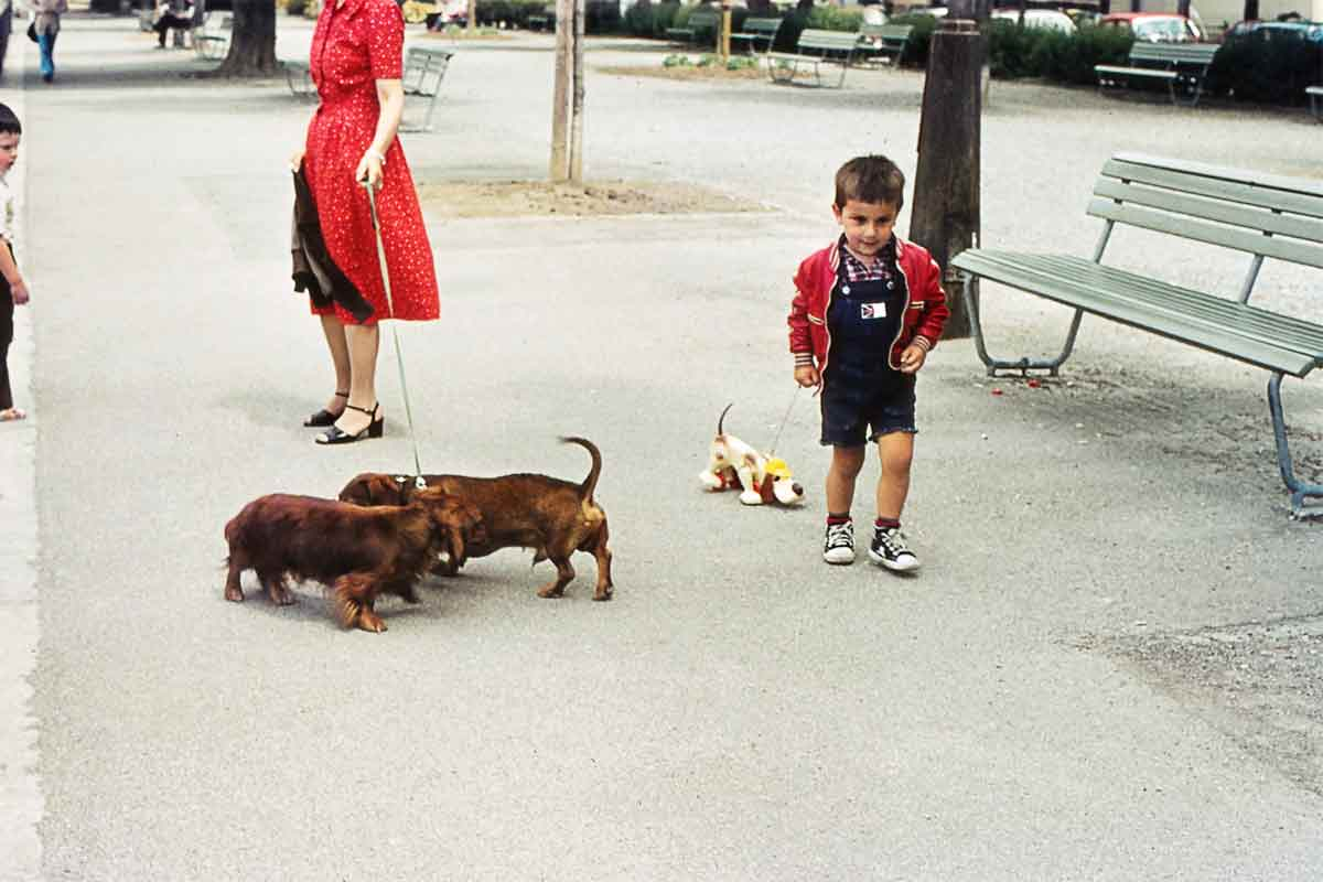 An image of Cenk Sönmezsoy as a child walking wa toy puppy with two dogs beside him.