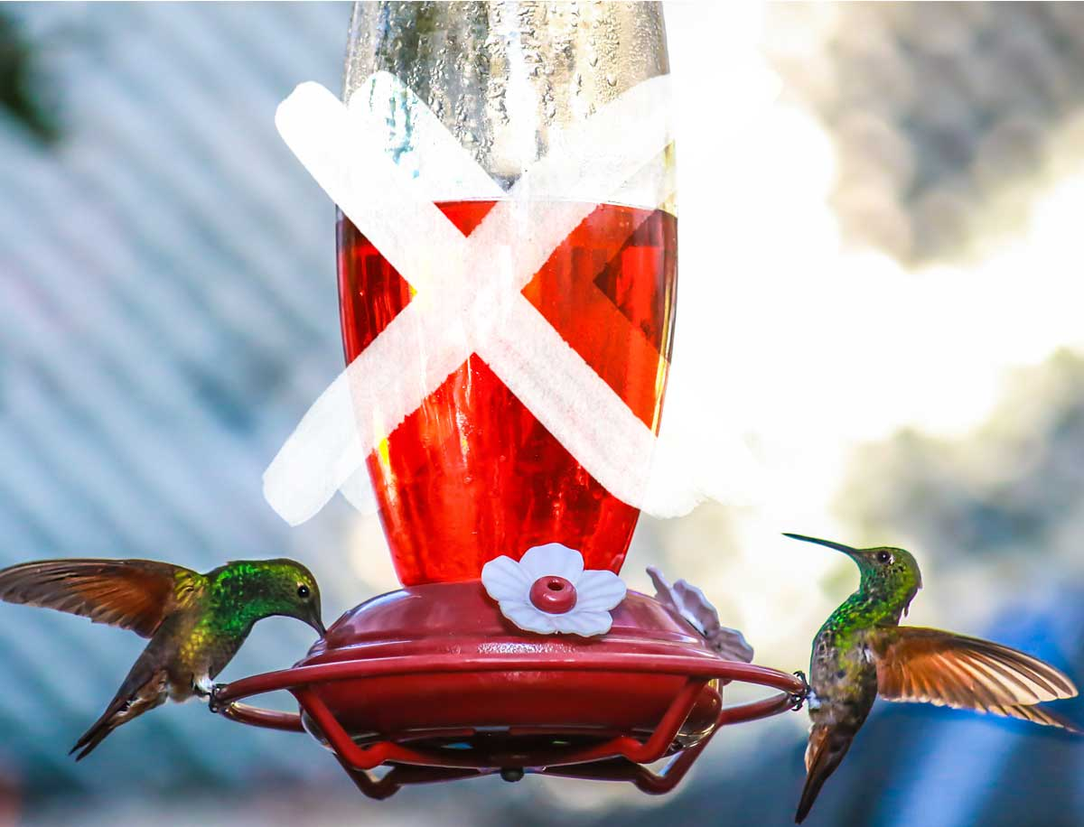 An image of 2 hummingbirds feeding from a feeder with red dye in the nectar and an 'x' through the image for the writing 'how to make hummingbird nectar'.