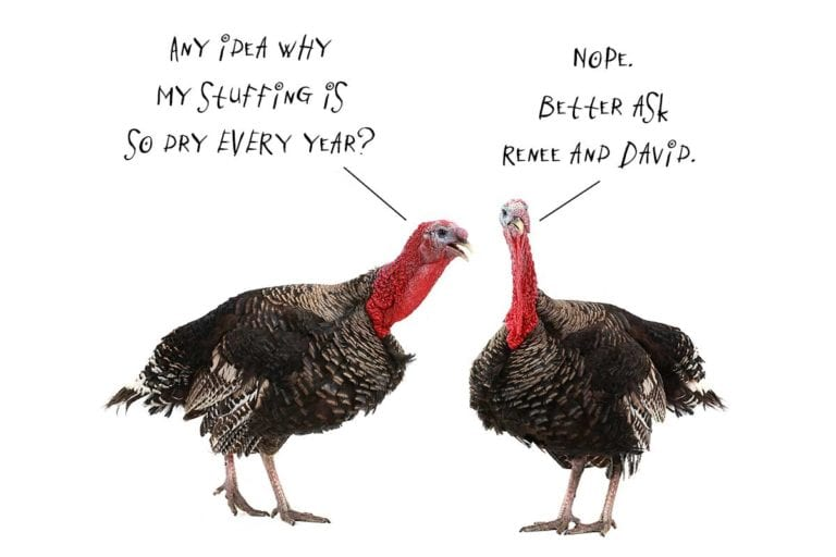 An image of two turkeys talking to each other for the podcast Talking With My Mouth Full, Ep. 37: Your Thanksgiving Questions Answered, 2020 Edition.